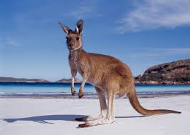 Australia is well known for its commitment to conservation through the work of late Australian Steve Irwin.
